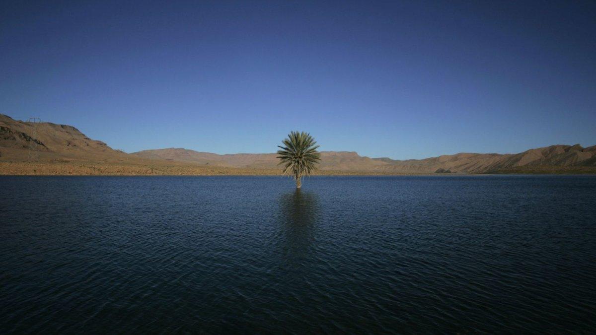 a-palm-tree-grows-in-the-errachidia-reservoir-near-the-ziz-oasis.jpg